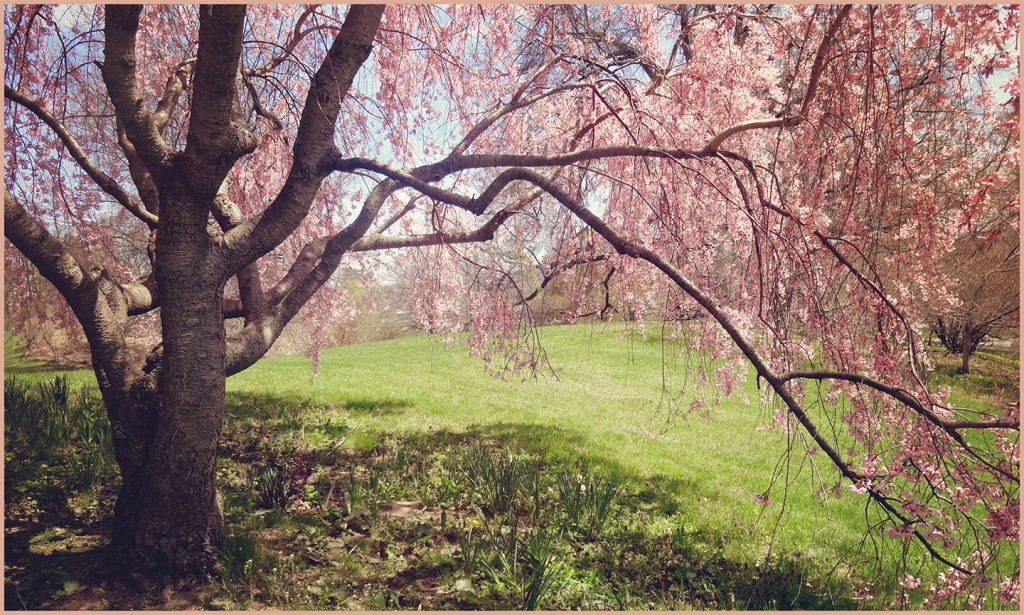 Lilac Festival and Spring Giveaway
